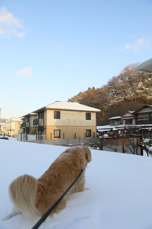 雪の後♪_b0275998_18452310.jpg