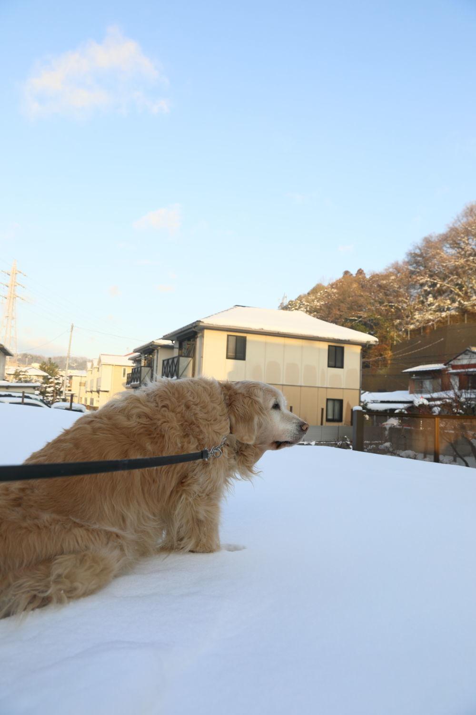 雪の後♪_b0275998_18452633.jpg