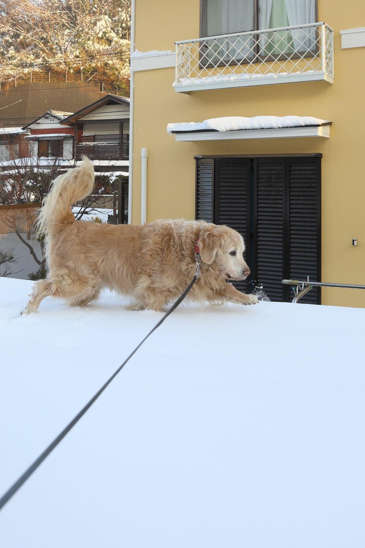 雪の後♪_b0275998_18453037.jpg