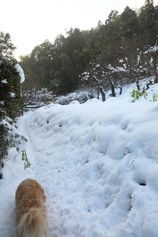 雪の後♪_b0275998_18453658.jpg
