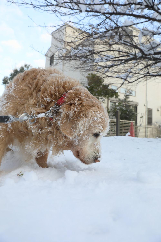 雪の後♪_b0275998_18454781.jpg