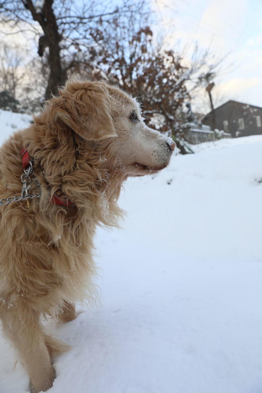 雪の後♪_b0275998_18460540.jpg
