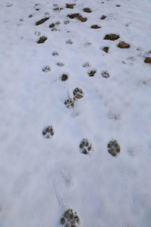 雪の後♪_b0275998_18464387.jpg