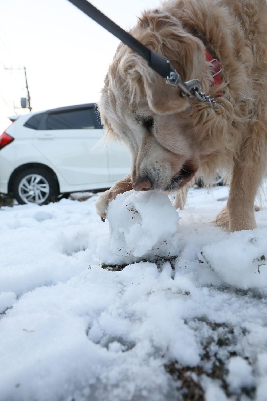 雪の後♪_b0275998_18510993.jpg