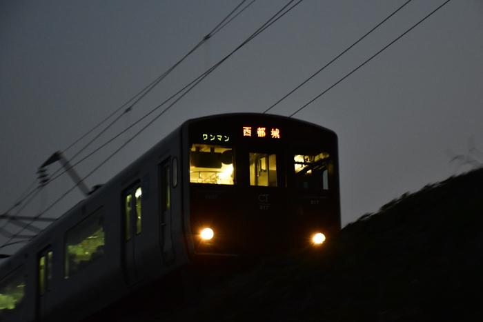 むぎゅ!のジロちゃん と 大淀川の白鳥 (*^_^*)_c0049299_20054382.jpg