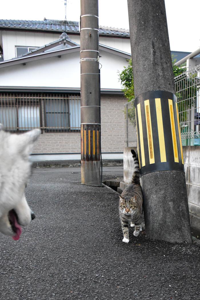 むぎゅ!のジロちゃん と 大淀川の白鳥 (*^_^*)_c0049299_20085773.jpg