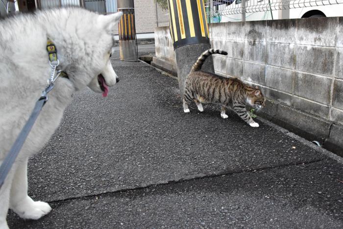 むぎゅ!のジロちゃん と 大淀川の白鳥 (*^_^*)_c0049299_20091390.jpg