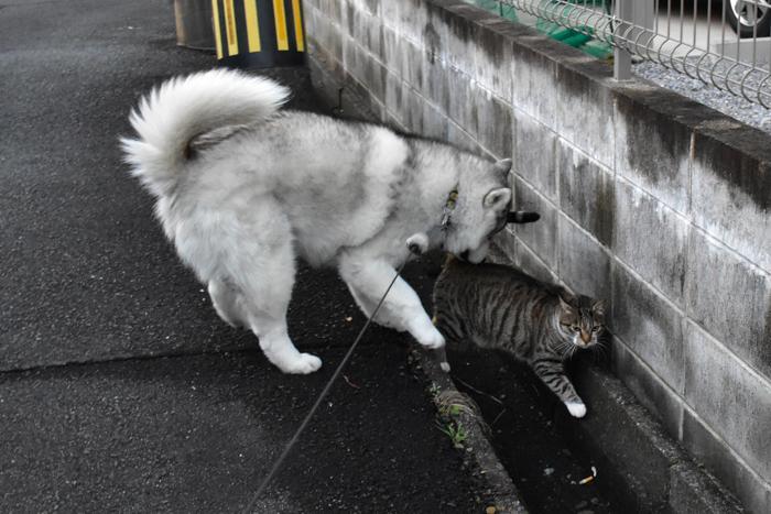 むぎゅ!のジロちゃん と 大淀川の白鳥 (*^_^*)_c0049299_20092317.jpg