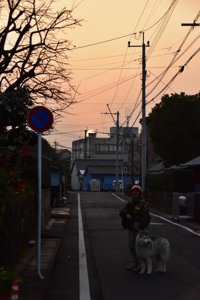 むぎゅ!のジロちゃん と 大淀川の白鳥 (*^_^*)_c0049299_20172928.jpg