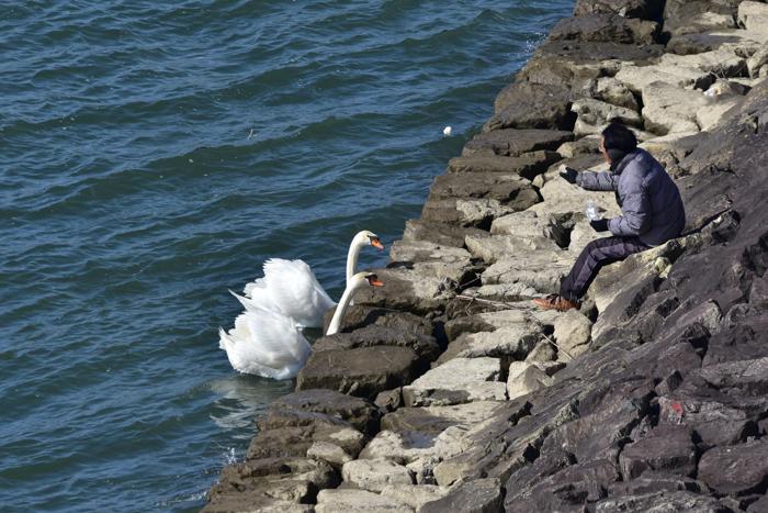 むぎゅ!のジロちゃん と 大淀川の白鳥 (*^_^*)_c0049299_20285186.jpg