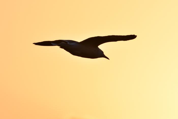むぎゅ!のジロちゃん と 大淀川の白鳥 (*^_^*)_c0049299_20320738.jpg
