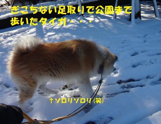 f0121712_06471021.jpg