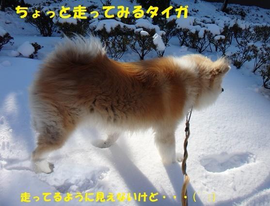 f0121712_07053634.jpg