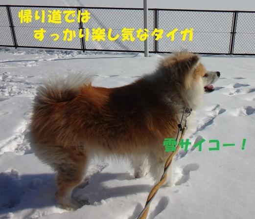 f0121712_07464452.jpg