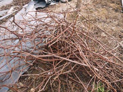 熊本ぶどう 社方園 剪定作業2018(後編 樹勢が良いので剪定した枝は良い音、良い色、重いんです)_a0254656_17473533.jpg