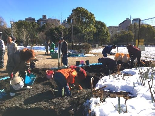 1月25日駒場野公園バラ花壇改修作業_a0094959_22290838.jpg