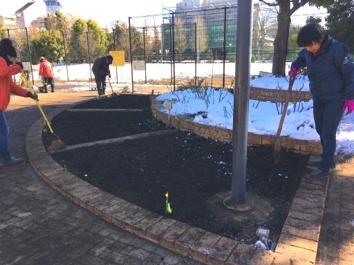1月25日駒場野公園バラ花壇改修作業_a0094959_22300927.jpg