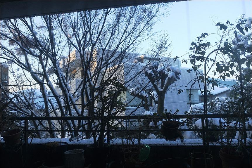 大雪の後の東京はなんとも寒い、寒い!_a0031363_17131104.jpg