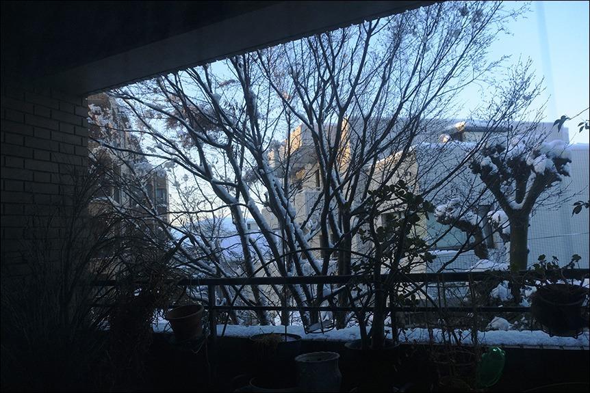 大雪の後の東京はなんとも寒い、寒い!_a0031363_17132082.jpg