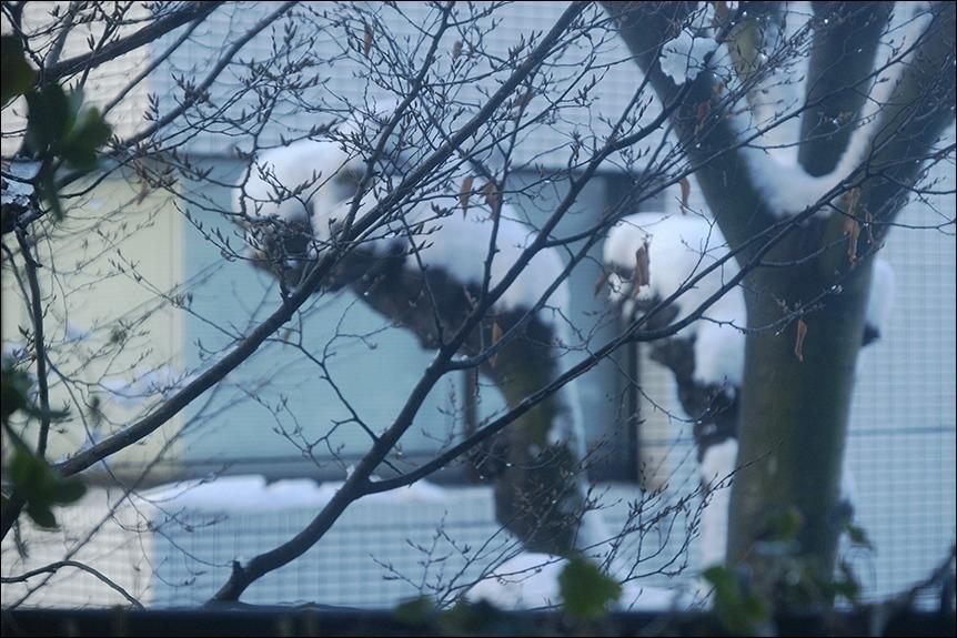 大雪の後の東京はなんとも寒い、寒い!_a0031363_17133990.jpg