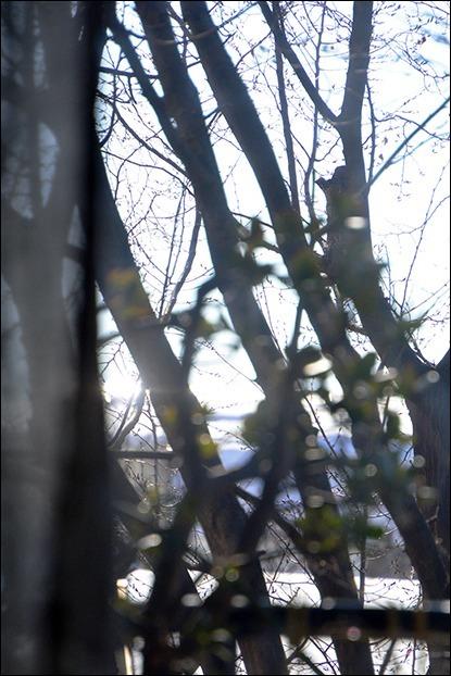 マイナス三度の朝はまだ太陽が輝かない_a0031363_17135395.jpg