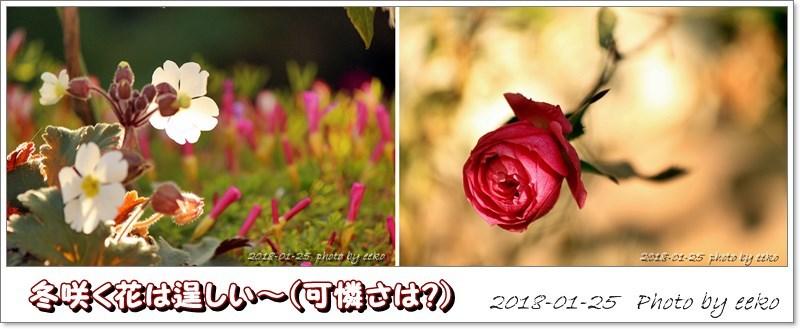 f0104569_14362978.jpg