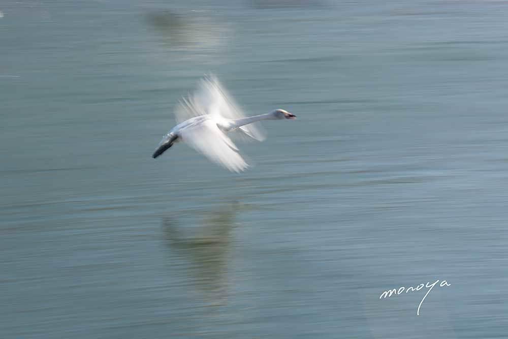 白鳥の湖_c0085877_06234326.jpg