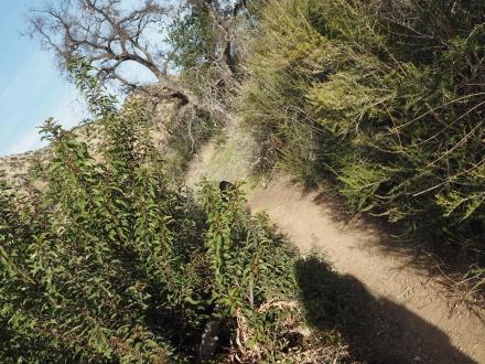 贅沢なSunday Hiking@El Escopin Park_e0183383_10593395.jpg