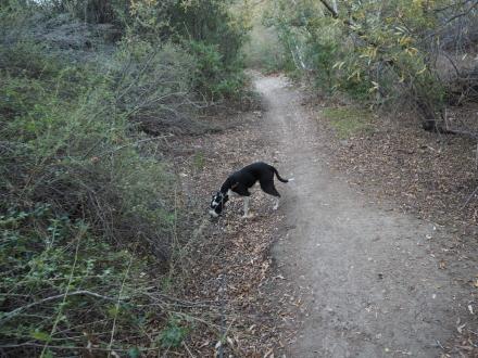 贅沢なSunday Hiking@El Escopin Park_e0183383_11293354.jpg