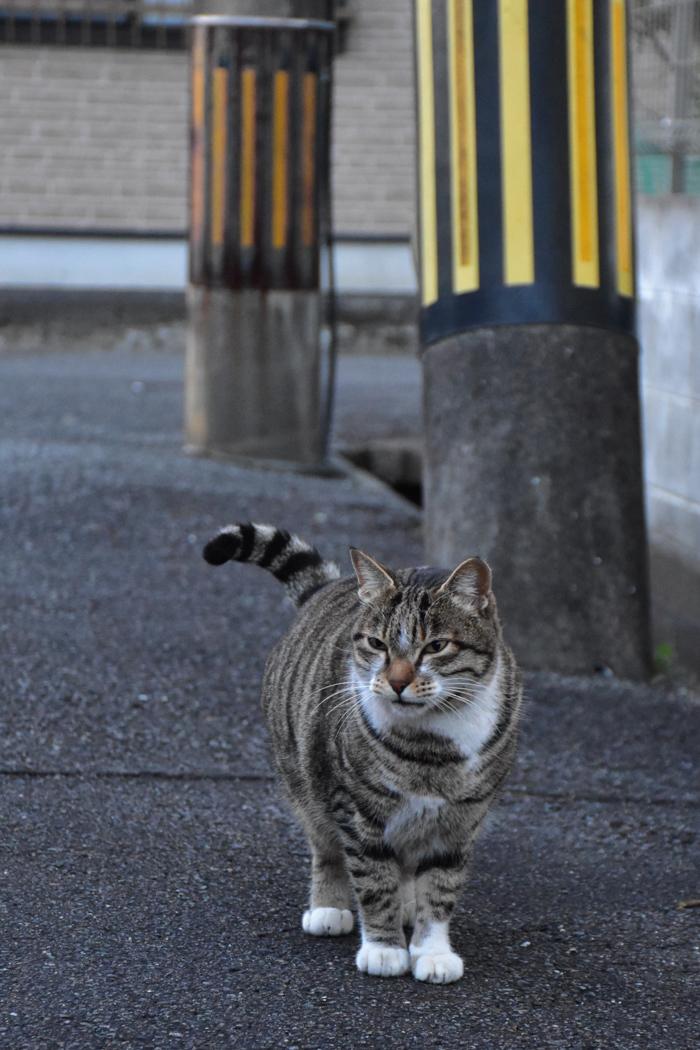 ジロちゃんとふれあう朝 (^o^)_c0049299_21572330.jpg