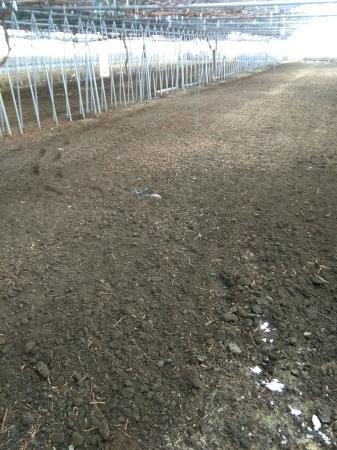 ぶどうのハウスを耕しています。_d0026905_14173313.jpg