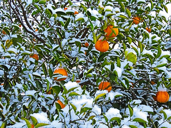 2018年1月26日 雪の朝 _b0341140_1010786.jpg