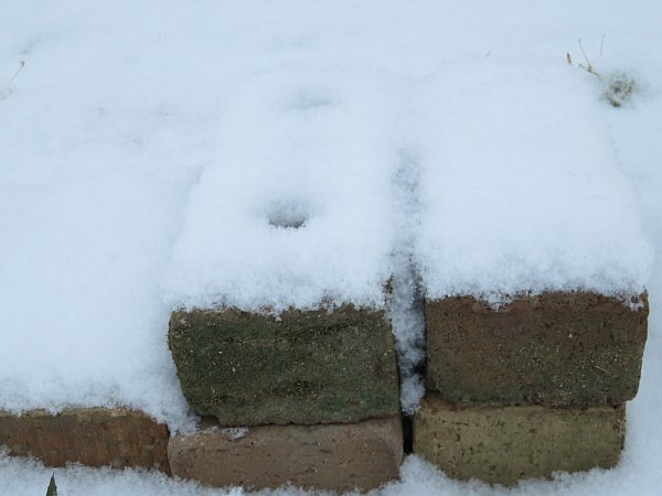 2018年1月26日 雪の朝 _b0341140_108172.jpg