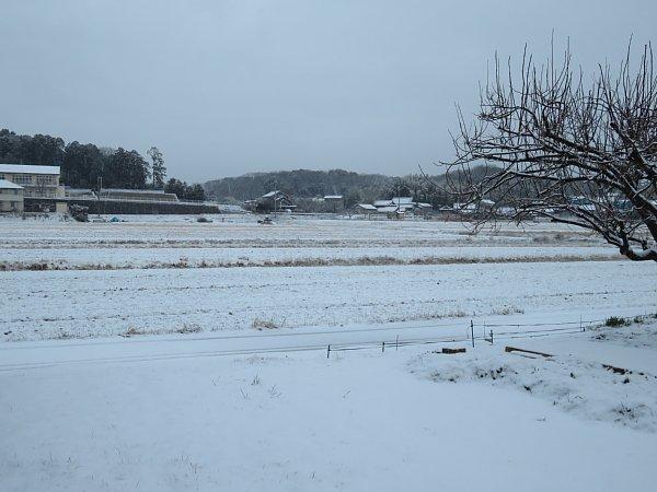 2018年1月26日 雪の朝 _b0341140_1083594.jpg