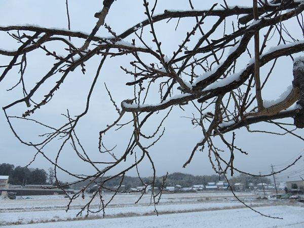 2018年1月26日 雪の朝 _b0341140_1084917.jpg