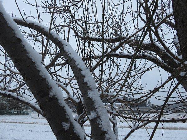 2018年1月26日 雪の朝 _b0341140_109250.jpg