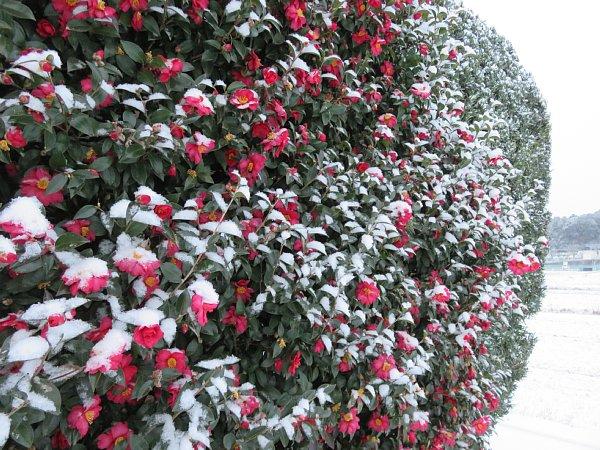 2018年1月26日 雪の朝 _b0341140_109313.jpg