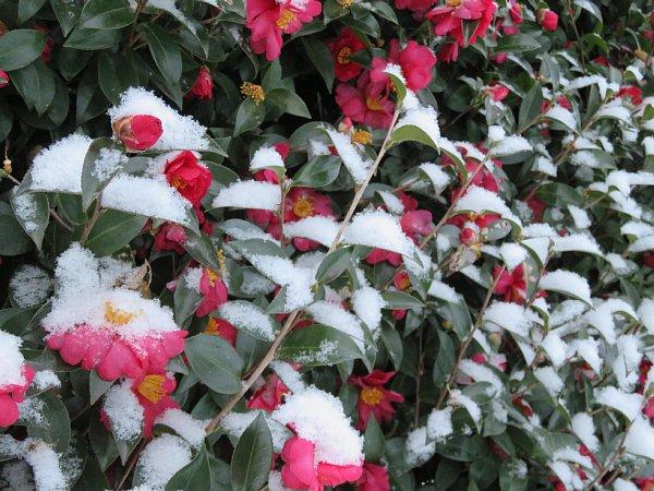 2018年1月26日 雪の朝 _b0341140_1094297.jpg