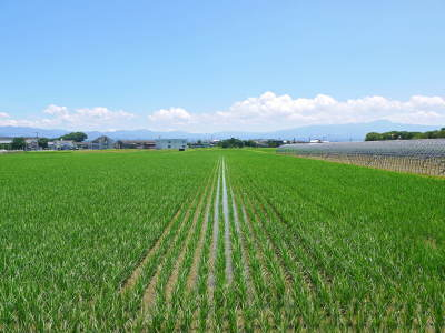 七城米大好評発売中!長尾農園さんは平成30年度の米作りをスタートしました!天地返しの様子(2018前編)_a0254656_17554878.jpg