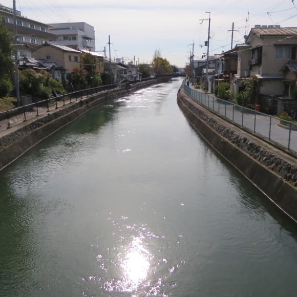 疏水沿いをただただ歩いたという記事なので大して面白くありません 京都市_c0001670_20433313.jpg