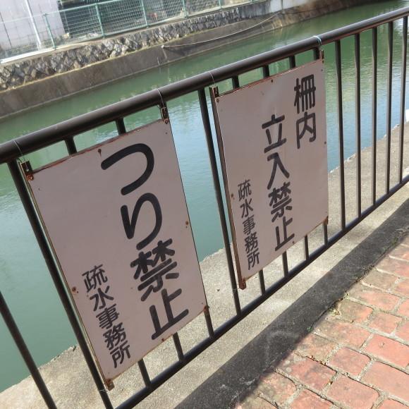 疏水沿いをただただ歩いたという記事なので大して面白くありません 京都市_c0001670_20435836.jpg