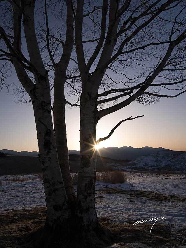 丘の一本樹_c0085877_06202813.jpg