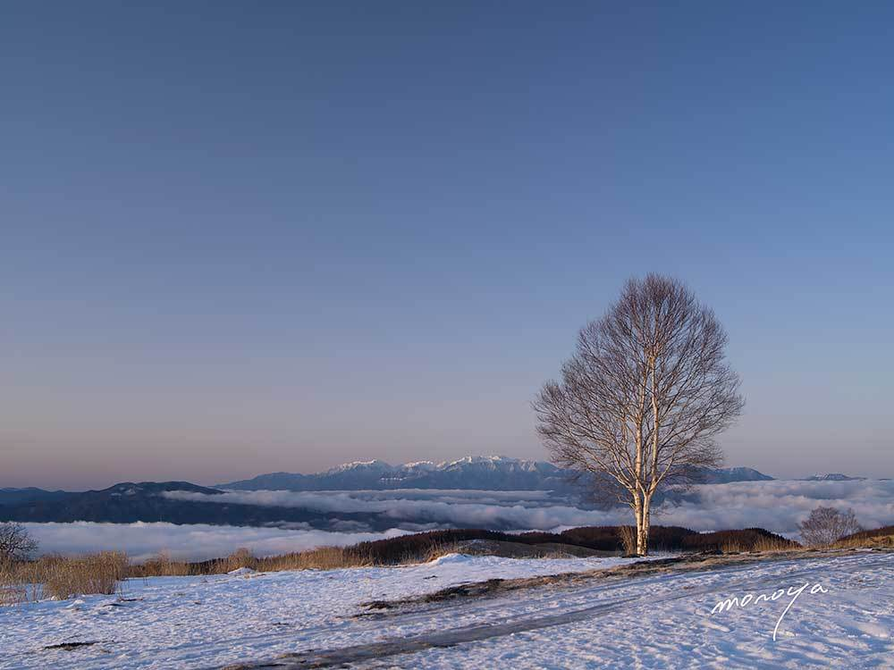 丘の一本樹_c0085877_06203678.jpg
