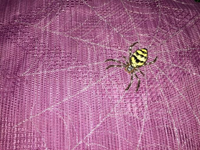 蜘蛛の夏帯完成!_e0385587_02104505.jpeg