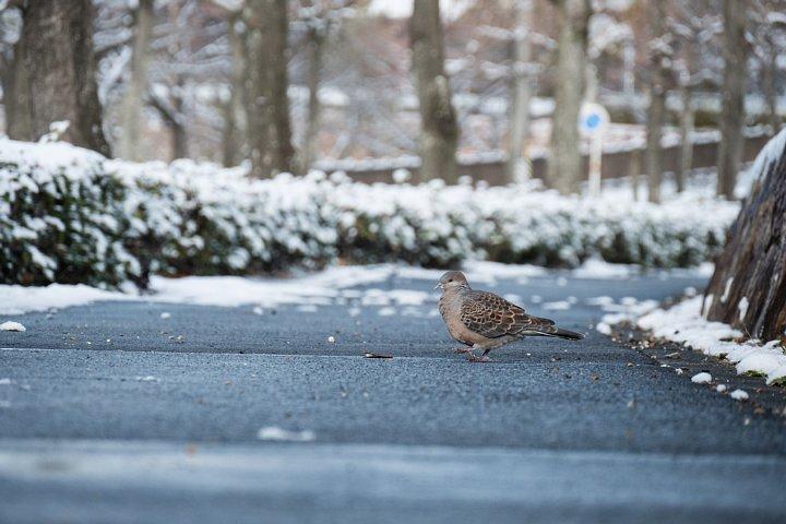 朝日に輝く雪の公園_d0353489_1121297.jpg