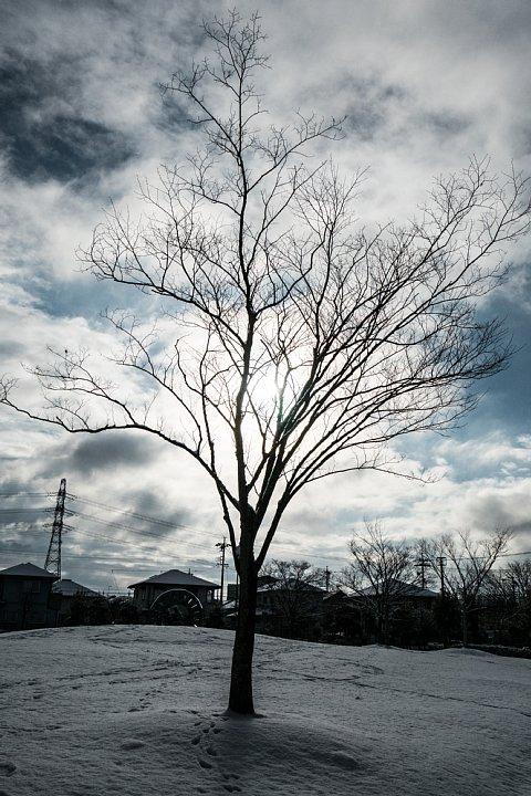 朝日に輝く雪の公園_d0353489_11214770.jpg