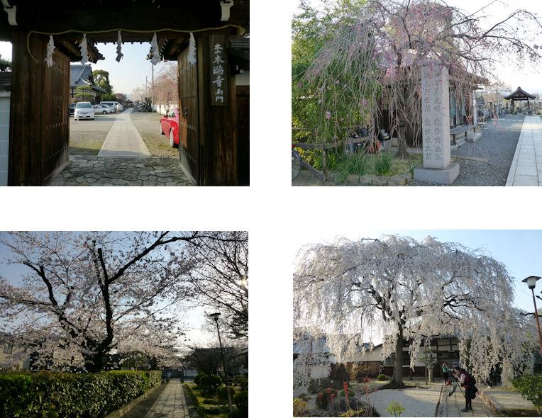 京都観桜編(16):本満寺(15.3)_c0051620_21331937.jpg