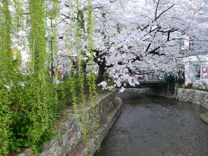 京都観桜編(16):本満寺(15.3)_c0051620_21381720.jpg
