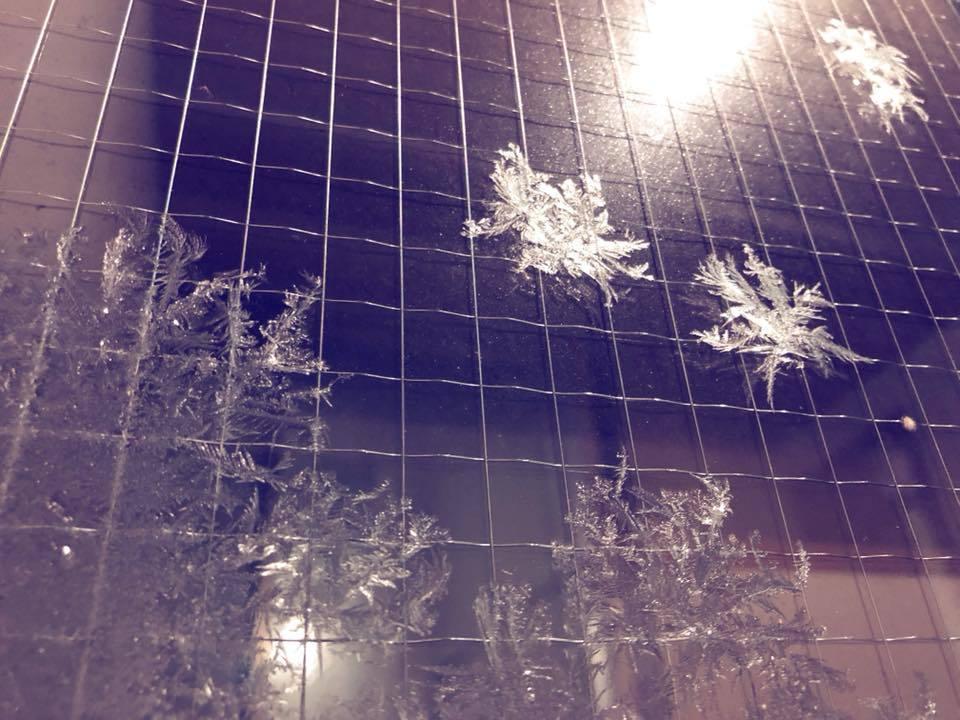 *雪の花*_e0197227_15302554.jpg