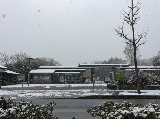 雪の京都_c0223630_12233604.jpg